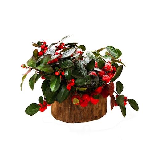 Weihnachtsgesteck mit Beeren in Baumstamm Vase Weihnachtsdekoration für Weihnachtsfeier Betriebsfeier Tischdekoration Bas de Boer Eventstyling www.basdeboer eventstyling.de 08 - Weihnachtsdeko und Weihnachtsbäume